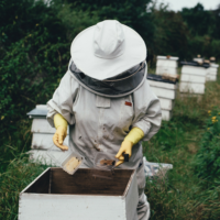 Beekeeper tending the hive.