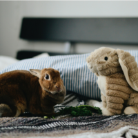 Rabbit and stuffed toy rabbit.